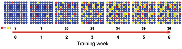 Evolving adenovirus subtype B14 incidence rate per 100 US Air Force basic military trainees over 6.5 weeks of basic training, based on epidemiologic and laboratory surveillance data. Red circles, acutely ill; yellow circles, recovering/possibly infectious; blue circles, well.