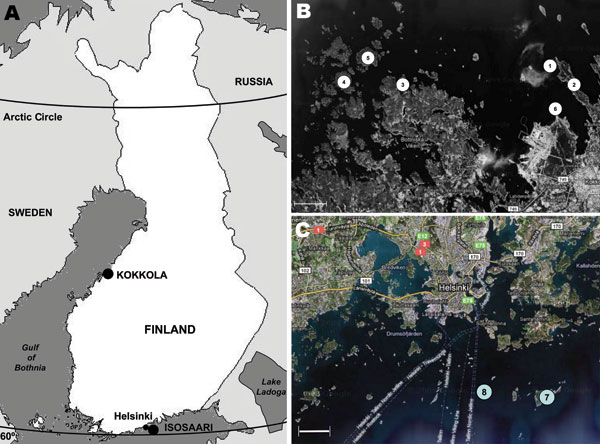 Sites at which rodents were trapped during winters of 2008 and 2009, Finland. A) Locations of trapping sites within Finland. B) Kokkola archipelago, where Siberian subtype of tick-borne encephalitis virus is endemic: 1,Trullevi, Kupu Island; 2,Trullevi; 3, Enträskholmen Island; 4, Börskär Island; 5, Norra Hamnskäret Island; 6, Harrbådan. C) Helsinki archipelago, Isosaari, where European subtype of tick-borne encephalitis virus is endemic: 7, Isosaari Island; 8, Harmaja Island. Scale bars indicat
