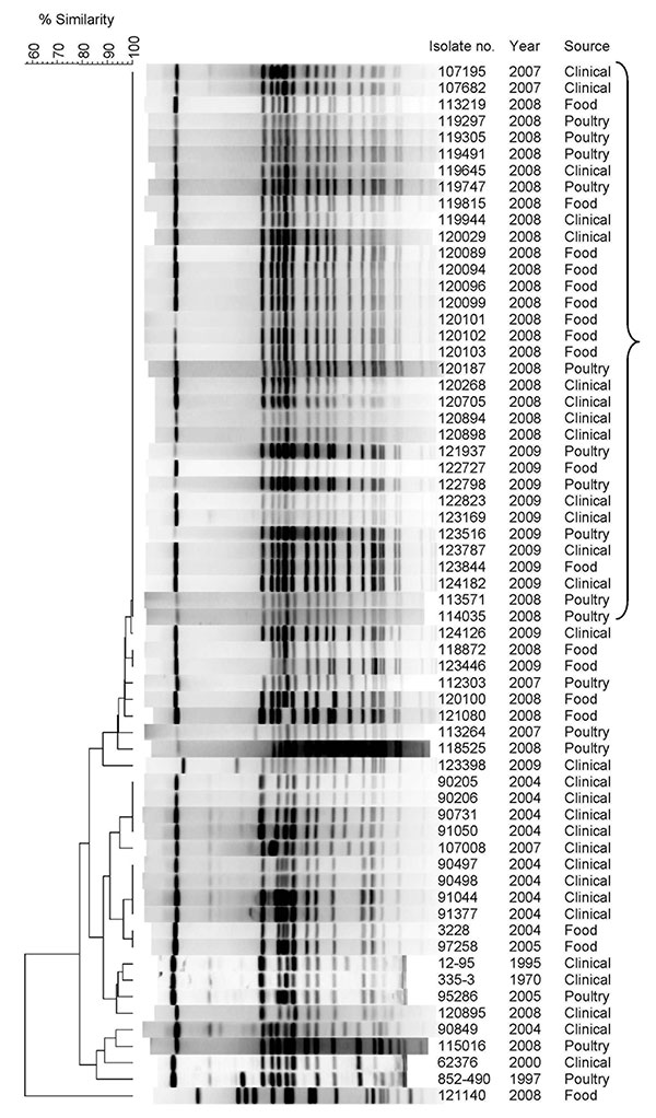 Pulsed-field gel electrophoresis (PFGE) patterns of Salmonella enterica serovar Infantis isolates from clinical, food, and poultry sources isolated in Israel, 1970–2009, showing a high degree of clonality. Isolate number, year of isolation, and source are indicated. Bracket indicates I1 pulsotype pattern. Macrodigestion performed using XbaI restriction enzyme and genetic similarity (in %) was based on dice coefficients. PFGE was conducted according to the standardized Salmonella protocol Centers