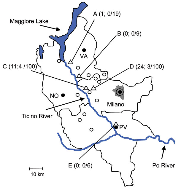 Collection sites (triangles A–E) of Ixodes ricinus ticks in the counties of Milano, Pavia, and Varese, Po River Valley, Italy, 2008. Ticks were collected in rural or suburban areas of the municipalities of Somma Lombardo (collection site A), Lonate Pozzolo (B), Magenta (C, D), and Pavia (E). The 3 numbers in parentheses for each collection site indicate number of tick nymphs positive for Borrelia afzelii, number of nymphs positive for B. lusitaniae, and number of nymphs examined by PCR. The adul