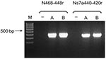 Thumbnail of Bat coronavirus/Philippines/Dilliman1525G2/2008 mRNA in experimentally infected fruit bats, the Philippines. Reverse transcription–PCR results for small intestines of bats A and B. Lane M, 100-bp DNA ladder; lane –, nontemplate control.