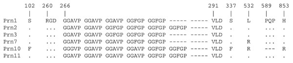 Amino acid sequence of pertactin (Prn) of Bordetella pertussis from China. Numbering is relative to the first methionine of Prn1. Dots represent identical sequences and dashes represent deletions. The RGD (arg-gly-asp) motif implicated in adherence to host receptors is indicated.