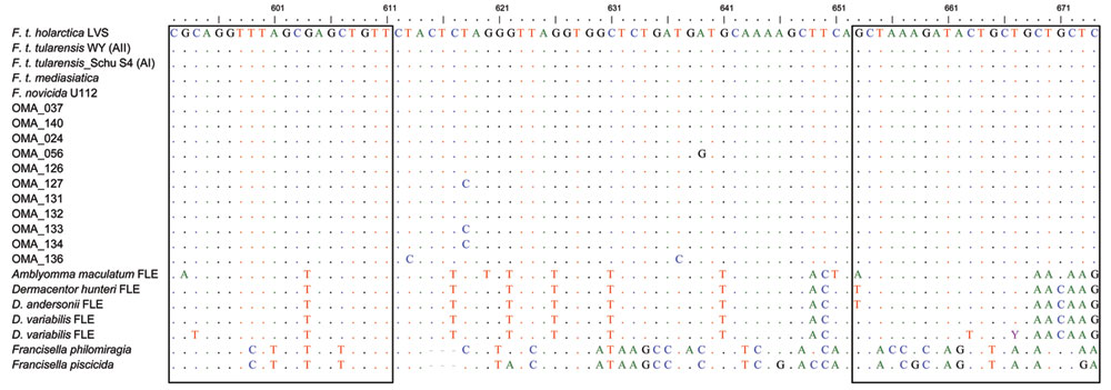 Multiple alignment of the 11 Francisella lpnA sequences obtained from mosquitoes in Sweden (hatched from field-collected larvae) with previously published sequences of Francisella species and subspecies, and Francisella-like endosymbionts (FLE). Boxed nucleotides represent target sequences of lpnA primers. The nucleotide positions 592–674 refer to F. tularensis holarctica live vaccine strain (LVS). Colors indicate individual nucleotides to clearly delineate those diverging from the F. tularensis