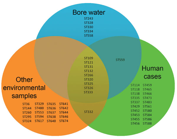 Venn diagram of sequence types (STs) determined by multilocus sequence typing found in Burkholderia pseudomallei strains from bore water (n = 15 STs), human cases (n = 31 STs), and other environmental samples (n = 30 STs) from the rural region of Darwin, Northern Territory, Australia.