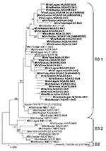 Thumbnail of Phylogenetic tree including genotype B3 strains of measles virus (MV) from Nigeria collected in 1997–1998 and 2003–2005 (boldface) and World Health Organization (WHO) reference strains of genotypes B3.1, B3.2, and B2 (italics). Measles strains were named as indicated in the legend to Figure 1. For all strains from 2003–2005, which have been published, the GenBank accession number is given in brackets. For all strains from 1997–1998, NIE had been used as a 3-letter code for the count