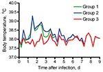 Thumbnail of Average body temperatures of 2 groups of cats experimentally infected with pandemic (H1N1) 2009 virus (groups 1 and 2) and sentinel cats (group 3).