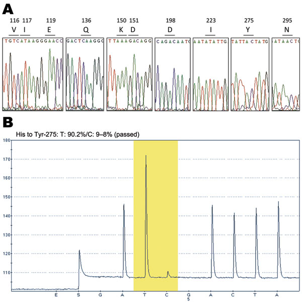 DNA sequence electropherograms for neuraminidase (NA) gene sequences. A) Analysis of molecular markers (V116, I117, E119, Q136, K150, D151, D198, I223, H275, and N295) for oseltamivir and/or zanamivir resistance among the pandemic (H1N1) 2009 virus isolates. The oseltamivir resistance–conferring mutation CAC (histidine) to TAC (tyrosine) at position 275 was detected in the InDRE797 sample. B) Detection of the H275Y mutation in the NA of the viruses by single-nucleotide polymorphism analysis at N