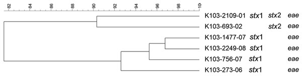 Dendrogram of Shiga toxin–producing Escherichia coli O103 strains isolated from human patients, Switzerland, 2000–2009. stx, Shiga toxin gene; eae, intimin gene. Scale bar indicates degree of similarity (%).