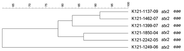 Dendrogram of Shiga toxin–producing Escherichia coli O121 strains isolated from human patients, Switzerland, 2000–2009 in Switzerland. stx, Shiga toxin gene; eae, intimin gene. Scale bar indicates degree of similarity (%).