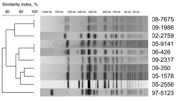 XbaI pulsed-field gel electrophoresis (PFGE) profiles obtained from 10 Salmonella enterica serotype Typhi isolates belonging to subpopulation B. The dendrograms generated by BioNumerics version 3.5 software (Applied Maths, Sint-Martens-Latem, Belgium) show the results of cluster analysis on the basis of PFGE fingerprinting. Similarity analysis was performed by using the Dice coefficient, and clustering was done by using the unweighted pair-group method with arithmetic averages.