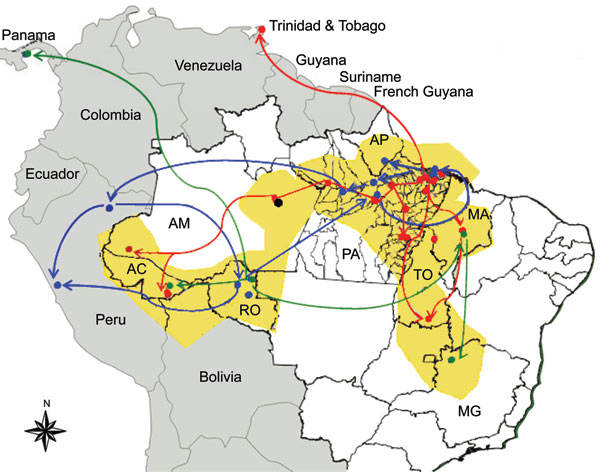 Geographic dispersion of Oropouche virus (OROV) genotypes in South America during 1955–2009 based on data from the N gene. Yellow shading, coverage area of OROV in Brazil; red line, dispersion route for genotype I; blue line, dispersion route for genotype II; green line, dispersion route for genotype III; black dot, genotype IV. AC, Acre; AP, Amapá; AM, Amazonas; MA, Maranhão; MG, Minas Gerais; PA, Pará; RO, Rondônia, TO, Tocantins.
