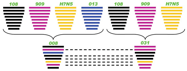 Putative genomic compositions of the novel avian influenza (H5N5) viruses isolated from domestic ducks in the People's Republic of China, December 2008–January 2009, with their possible donors. The 8 gene segments (from top to bottom) in each virus are polymerase basic protein 2, polymerase basic protein 1, polymerase acidic protein, hemagglutinin (HA), nucleocapsid protein, neuraminidase, matrix protein, and nonstructural protein. Each color indicates a separate virus background. Dashed lines i