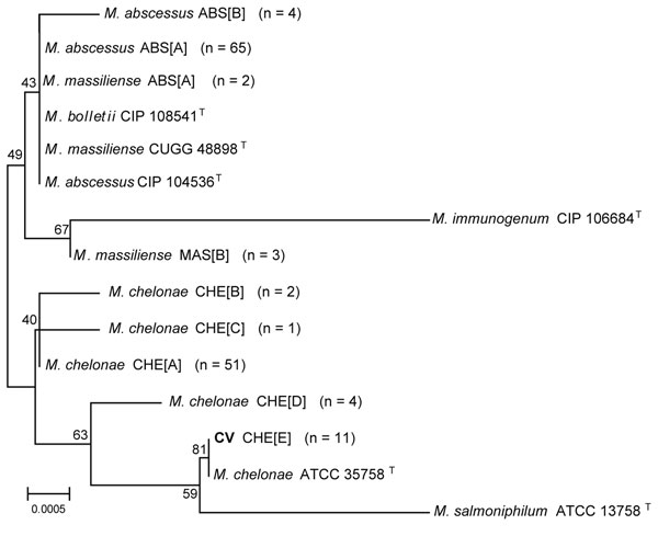 Neighbor-joining tree of a 1,341-bp region of unique 16S rRNA gene sequences of 138 clinical isolates and reference strains of the Mycobacterium chelonae-abscessus complex. Branch support is recorded at nodes as a percentage of 1,000 bootstrap iterations. Clinical isolates are labeled by the identification, followed by the sequevar group and the number of isolates. Scale bar indicates nucleotide substitutions per site. CIP, Collection of Institute Pasteur; CCUG, Culture Collection, University of