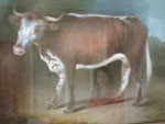 Thumbnail of Painting of a cow, Edward Jenner Museum, Berkeley, Gloucestershire, England.