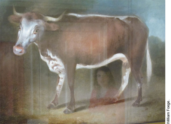 Painting of a cow, Edward Jenner Museum, Berkeley, Gloucestershire, England.