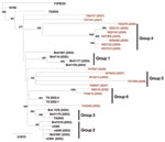 Thumbnail of Maximum-likelihood phylogenetic tree of Upper Texas Gulf Coast, USA, West Nile virus isolates, 2002–2009. The tree was inferred from open reading frame sequences of 33 Upper Texas Gulf Coast isolates and NY99 by using PhyML (17) and rooted with IS-98 STD. The outgroup has been removed. Bootstrap values are for 1,000 replicates and only values >500 are shown. Groups 1–3 were previously identified by May et al. (12). Red, isolates sequenced in this study. Scale bar indicates nucleo