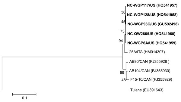 Neighbor-joining phylogenetic tree of St-Valerien–like viruses based on the predicted capsid viral protein 1 sequences (516 aa). The newly identified US St-Valerien–like virus strains are in boldface. The GenBank accession number of each strain is within parentheses. Bootstrap values are shown near branches. Rhesus monkey Tulane calicivirus was an outgroup control. Scale bar indicates amino acidsubstitutions per site.