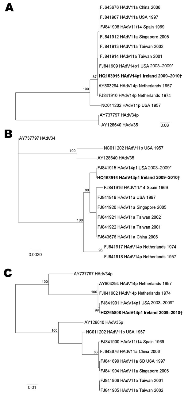 Maximum-likelihood trees of the full-length fiber (A), E1A (B), and hexon (C) open reading frames of adenovirus B2 subgenera. Phylogenetic analysis was performed by using reference sequences from GenBank for the adenovirus B2 subgenera, including prototype reference strains. The query sequences from this study are identical and are represented in boldface. The tree was built in PAUP* (23) on the basis of the HKY85 model of evolution and for the fiber tree also with a β distribution and used midp