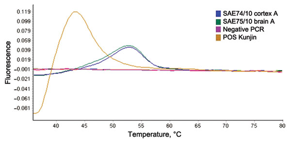 Dissociation curve analysis of the diagnostic nested real-time reverse transcription PCR of West Nile virus isolated from a mare and fetus with fatal neurologic disease, South Africa, 2010. Positive control (Kunjin L1b); SAE74/10 (fetus); SAE75/10 (mare). Expected melting peak of lineage 2 = lineage 1b+6°C; lineage 1a = lineage 1b+10°C.