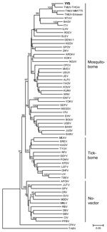 Thumbnail of Phylogenetic analysis of isolate YY5 (in boldface) from an ill Shaoxing duck in the People's Republic of China and selected other flaviviruses obtained by using an ≈1-kb nt sequence in the nonstructural 5 genomic region. The tree was constructed by the neighbor-joining method of MEGA (7). Numbers at nodes indicate bootstrap percentages obtained after 1,000 replicates; only bootstrap values >70% are shown. Scale bar indicates genetic distance. The sequences used in the phylogeneti