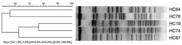 Cluster analysis of the enteroaggregative Escherichia coli strains from the pulsed-field gel electrophoresis fingerprinting.