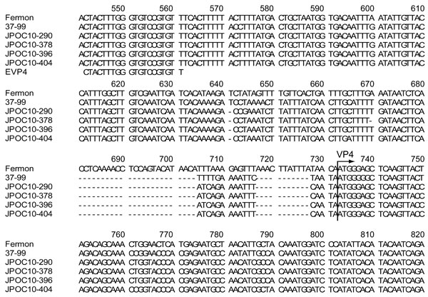 Nucleotide sequences of 5′ untranslated regions of enterovirus 68 strains, Osaka, Japan, October 2009–October 2010. The strain detected in Osaka showed deletions when compared with Fermon and 37–99 strains. Arrow indicates the start codon (ATG) of the viral protein 4 (VP4) gene. Partial nucleotide sequences (corresponding to nt 541–820 of the Fermon strain) of 5′ untranslated regions of Fermon, 37–99, JPOC10–290, JPOC10–378, JPOC10–396, JPOC10–404, and EVP4 primer were aligned by using BioEdit v