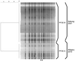 Thumbnail of NotI-digested pulsed-field gel electrophoresis (PFGE) profiles of Vibrio cholerae isolates, Laos, 2010. The names of the profiles and the sources of the isolates are shown on the right. A dendrogram was created with BioNumerics software (Applied Maths, Kortrijk, Belgium) by using the Dice coefficient, unweighted pair-group method with arithmetic means, and a band-position tolerance of 1.2%. Arrowheads at bottom indicate location of bands differing in PFGE-A and PFGE-B.