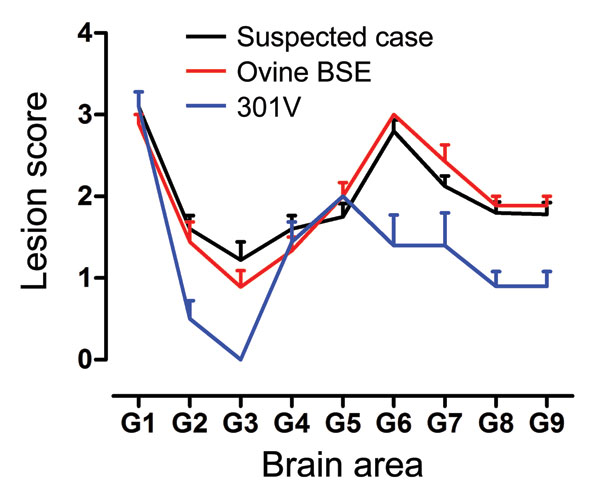 Lesion profiles from VM mice after second passage of the suspected case, serial passage of an ovine bovine spongiform encephalopathy (BSE) source, and a 301V control. Profiles were made on the basis of the lesion score, which is the quantification of transmissible spongiform encephalopathy–specific vacuolation in 9 neuroanatomical gray matter areas: G1, dorsal medulla nuclei; G2, cerebellar cortex of the folia including the granular layer, adjacent to the fourth ventricle; G3, cortex of the supe