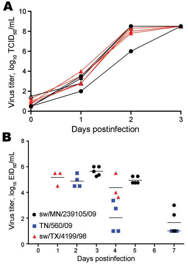 Replication of North American reassortant and endemic swine influenza viruses on swine testicle (ST) cells and in ferrets. A) The growth of 6 endemic swine viruses and 3 reassortant viruses (sw/MN/239105/09, sw/MN/239106/10, and sw/NC/239108/10) from 2009–2010 were analyzed in vitro. One curve corresponds to 1 isolate. Black lines and symbols indicate swine pandemic influenza reassortant viruses; red lines and symbols indicate swine triple reassortant (TR) influenza viruses. The progeny viruses