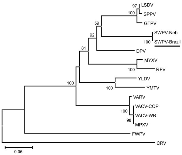 Phylogenetic tree based on the predicted amino acid sequences of fragments of the DNA polymerase, DNA topoisomerase, and viral late transcription factor-3 of the clinical isolate (GenBank accession nos. JF770341, JF770342, and JF770343) and 15 poxviruses. Sequences were aligned by ClustalX version 1.81 (www.clustal.org), and the concatenated alignments were used for phylogeny inference (MEGA4; www.megasoftware.net) opting for the neighbor-joining method and Poisson correction. We computed 1,500
