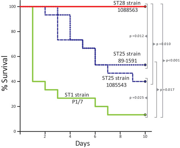 Survival of CD1 mice inoculated with Streptococcus suis strains of different sequence types (STs). Most animals that received the ST1 strain P1/7 died from septicemia during the first 3 days of the trial. Several animals in this group died from meningitis from day 6 postinfection. Two groups of mice received ST25 strains 89–1591 and 1085543, respectively. Survival of mice in these 2 groups was higher than in the group that received the ST1 strain. However, >40% of the animals in the 89–1591 g