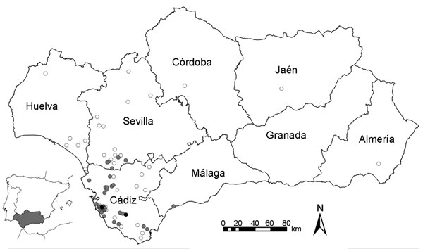 Spatial distribution of West Nile virus–infected horse herds (gray dots), virus-negative horse herds (white dots), and human cases (black dots) in Andalusia (southern Spain) at the end of 2010.