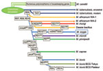 Thumbnail of Updated phylogeny of the Mycobacterium tuberculosis complex based on the findings of Brosch et al. (2). Combined findings place Mycobacterium orygis at a distinct phylogenetic position between the M. africanum/dassie bacillus/M. mungi cluster and M. microti.