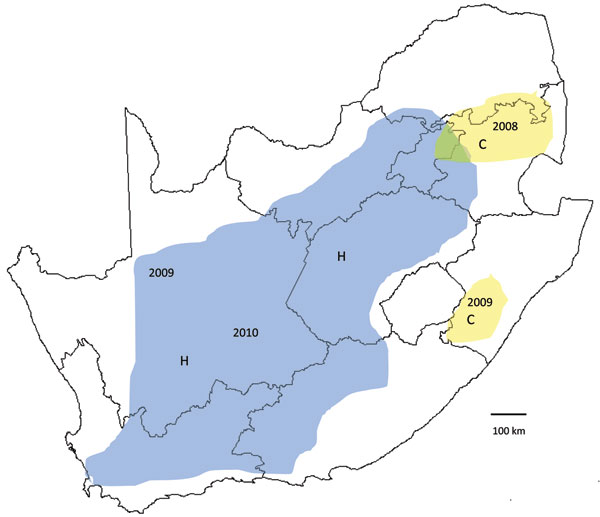 Recent outbreaks of Rift Valley fever in South Africa. Lineage C virus (yellow areas), which caused a small outbreak in Kruger National Park in 1999, was associated with scattered outbreaks of disease in adjacent parts of northeastern South Africa in 2008 and limited outbreaks to the south in KwaZulu-Natal Province early in 2009. Lineage H virus (blue area), which was first encountered in the Caprivi Strip of Namibia in 2004, caused focal outbreaks in the Northern Cape Province late in 2009, and