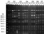 Thumbnail of Pulsed-field gel electrophoresis of Klebsiella pneumoniae isolates from fecal samples of 7 patient groups with liver abscess and healthy carriers, Taiwan, January 2009–December 2010. G, patient group; M, molecular mass marker; P, patient; HC, healthy carrier.