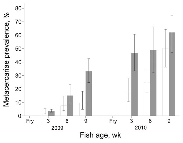 Mean prevalence of fish-borne zoonotic trematode metacercarie in juvenile fish from intervention (white bars) and nonintervention (gray bars) nurseries. Error bars indicate SEM.