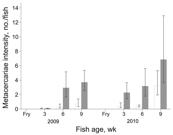 Mean intensity of fish-borne zoonotic trematode metacercariae/fish for juvenile fish from intervention (white bars) and nonintervention (gray bars) nurseries. Error bars indicate SEM.
