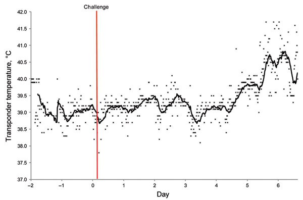 Temperature transponder data for horse 1 during experimental infection with Hendra virus, Australia. Before viral challenge, each mare was fitted with an intrauterine (transcervical) temperature transponder to allow continuous recording of core body temperature. Temperature was measured every 15 minutes in each horse. Solid line represents the moving average based on 20 temperature readings.
