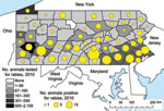Thumbnail of Reports of suspected and confirmed rabies among all animals (excluding bats) in Pennsylvania, 2010.
