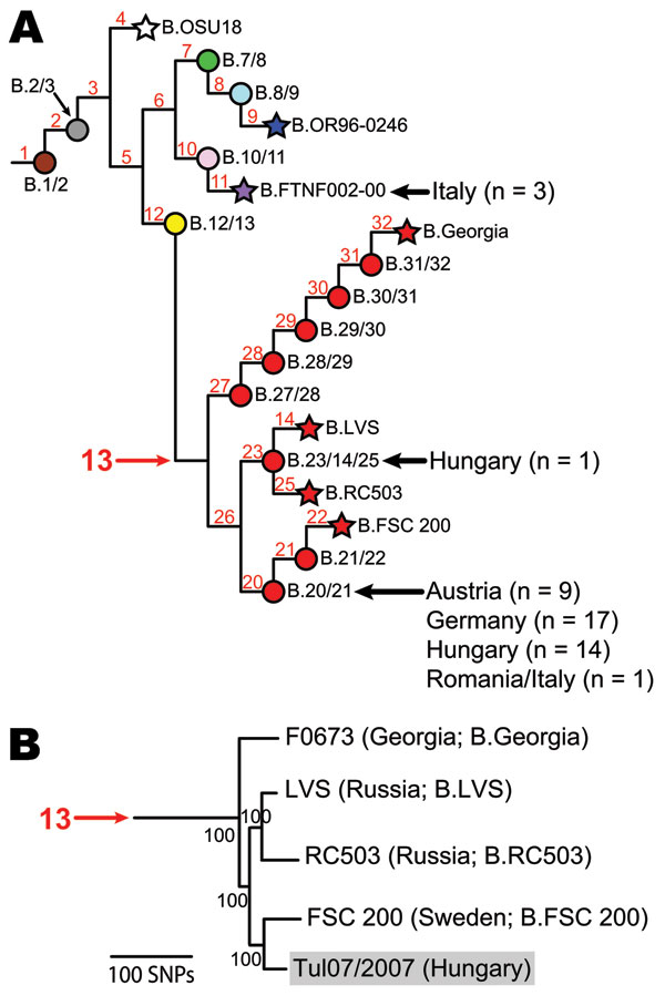 Existing phylogeny of Francisella tularensis subsp. holarctica. A) Single nucleotide polymorphism (SNP)–based phylogeny of F. tularensis subsp. holarctica derived from previous studies (5,6,8). Terminal subgroups representing sequenced strains are shown as stars, and intervening nodes representing collapsed branches are indicated by circles. Subclades within group B.13 are depicted in red. Isolates from Austria, Germany, Hungary, Italy, and Romania (n = 45) were assigned to existing subclades (b