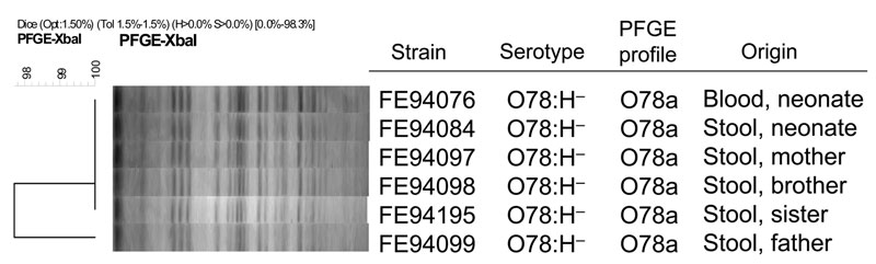 Cluster analysis of XbaI pulsed-field gel electrophoresis (PFGE) patterns of Shiga toxin–producing Escherichia coli O78:H– strains isolated from blood and feces of a neonate and from feces of his asymptomatic family members, Finland, 2009. Scale bar indicates genotypic similarity of the 6 strains.
