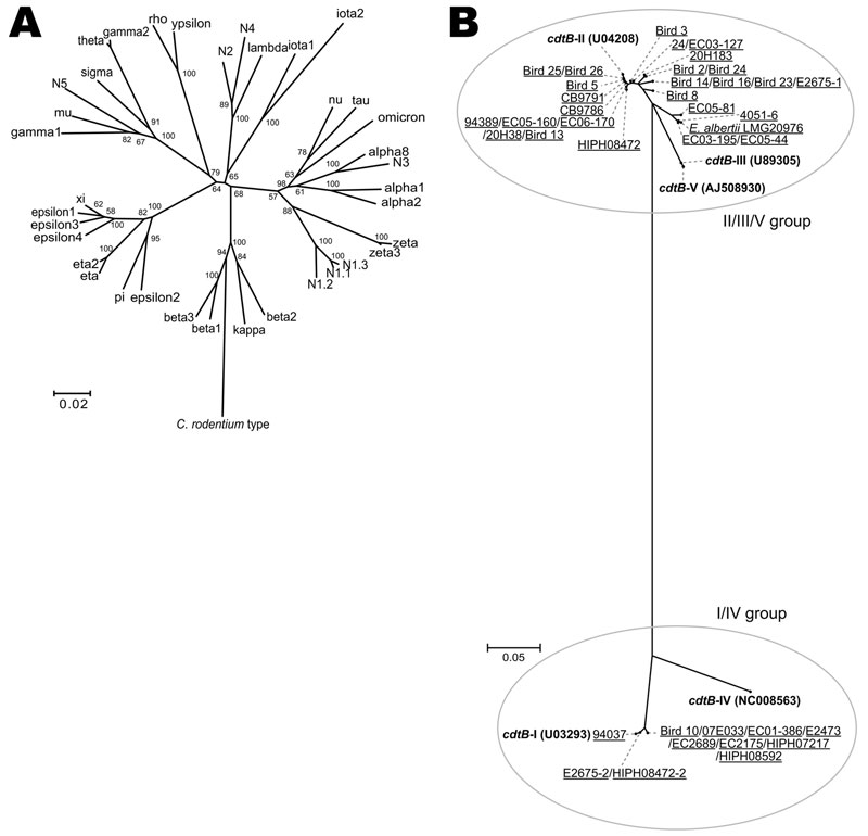 Phylogenies of the intimin subtypes and the cdtB genes of 275 eae-positive strains from humans, animals, and the environment that had been originally identified by routine diagnostic protocols as enteropathogenic or enterohemorrhagic Escherichia coli. A) Neighbor-joining tree constructed based on the amino acid sequences of 30 known intimin subtypes and previously undescribed 5 intimin subtypes (N1–N5) that were identified. The sequences of the N1–N5 alleles are substantially divergent from any