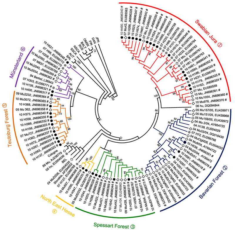 Neighbor-joining phylogenetic tree (TN93 evolutionary model) of Puumala virus (PUUV) strains constructed on the basis of partial sequences of the small segment (504-nt sequence, nt positions 392–894). Bootstrap values >70%, calculated from 10,000 replicates, are shown at the tree branches. Analysis was performed by using MEGA5 software (www.megasoftware.net). PUUV-like sequences from Japan (JPN) were used as outgroup. Numbers from 04 to 11 in front of the sample names indicate the year (2004–