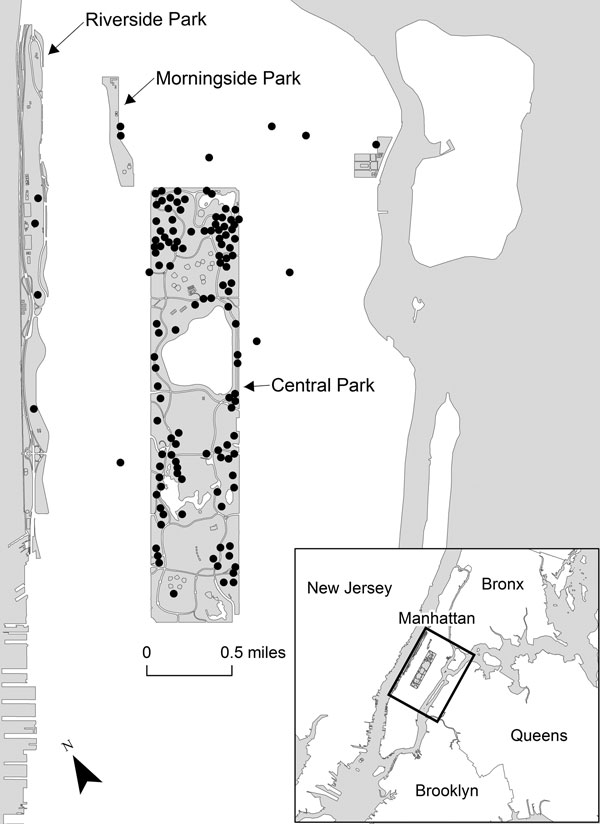 Location of rabid raccoons in and around Central Park, New York City, New York, USA, December 1, 2009–December 1, 2011. Each dot represents a rabid raccoon.