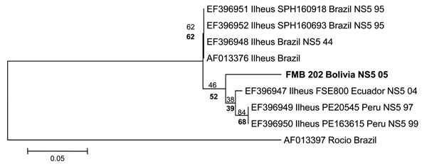 Phylogenetic analysis of the nonstructural protein 5 (NS5) gene region of 7 Ilheus virus isolates and a 189-bp nt sequence (FMB 202 Bolivia). Alignments were analyzed by using the neighbor-joining method with the Kimura 2-parameter algorithm in MEGA5 (www.megasoftware.net). Variation rate among sites was modeled with a gamma distribution (shape parameter = 1). Bootstrap confidence limits (from 1,000 replicates) are indicated at each node.  Values in boldface below branches were obtained by parsi
