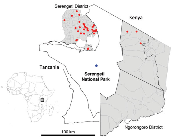 Serengeti National Park and surrounding districts (Serengeti and Ngorongoro). Blue dot indicates location of Ikoma lyssavirus–infected African civet within Ikoma Ward in northwest Tanzania. Red dots indicate cases of rabies confirmed during 2003–2011. Top left, map of Africa indicating study area in Tanzania (gray box).