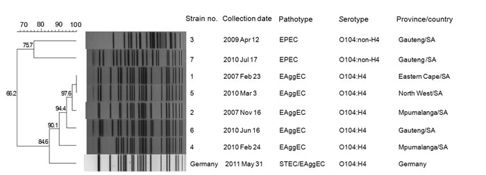 Pulsed-field gel electrophoresis profiles (XbaI digestion) of Escherichia coli O104 strains from South Africa (SA) compared with a strain from Germany. EPEC, enteropathogenic E. coli; EaggEC, enteroaggregative E. coli; STEC, Shiga toxin–producing E. coli. Scale bar and numbers along branches indicate percentage pattern similarity.