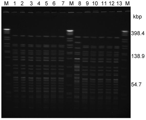 NotI-pulsed-field gel electrophoresis profiles of Vibrio cholerae isolated during the outbreak, Terengganu, Malaysia, 2009. Lane M: XbaI-digested Salmonella enterica serovar Braenderup H9812 as DNA standard; lanes 1–7 and 9–12: isolates of El Tor O1 serogroup (rectal swab); lane 8: isolate of non–O1/non–O139 serogroup (swab from ice factory); lane 13: El Tor O1 V. cholerae isolated in 2008 (Kuala Lumpur).