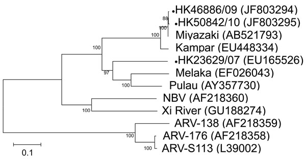 Phylogenetic tree of orthoreoviruses based on partial sequence alignment of the cell attachment protein (S1 gene segment). GenBank accession number for each sequence is in parentheses after the virus name. Numbers at nodes indicate bootstrap values based on 1,000 replicates. Dots indicate viruses isolated from 3 travelers who had returned from Indonesia to Hong Kong during 2007–2010. Scale bar indicates nucleotide substitutions per site. ARV, avian reovirus; NBV, Nelson Bay virus.