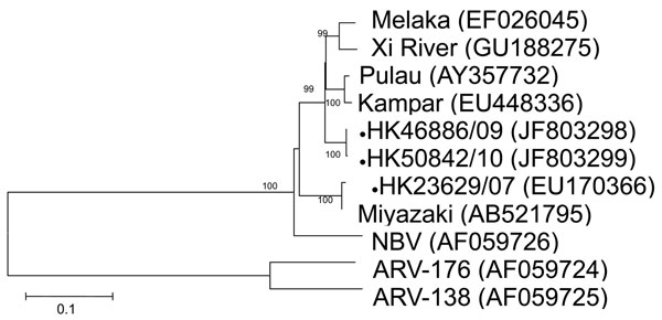 Phylogenetic tree of orthoreoviruses based on partial sequence alignment of the nonstructural protein (S3 gene segment). GenBank accession number for each sequence is in parentheses after the virus name. Numbers at nodes indicate bootstrap values based on 1,000 replicates. Dots indicate viruses isolated from 3 travelers who had returned from Indonesia to Hong Kong during 2007–2010. Scale bar indicates nucleotide substitutions per site. ARV, avian reovirus; NBV, Nelson Bay virus.